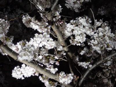 009 万国博記念公園(大阪府吹田市)(2003/04/08up)