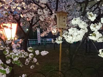 021 大阪造幣局(桜の通り抜け)(大阪府大阪市)(2016/04/19up)